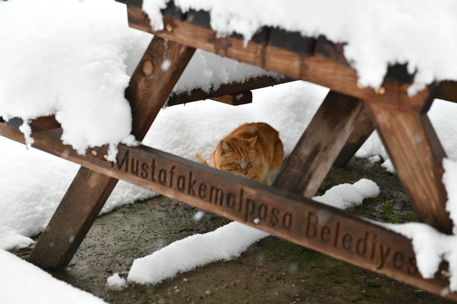 Mustafakemalpaşa'da Can Dostları İçin Seferberlik