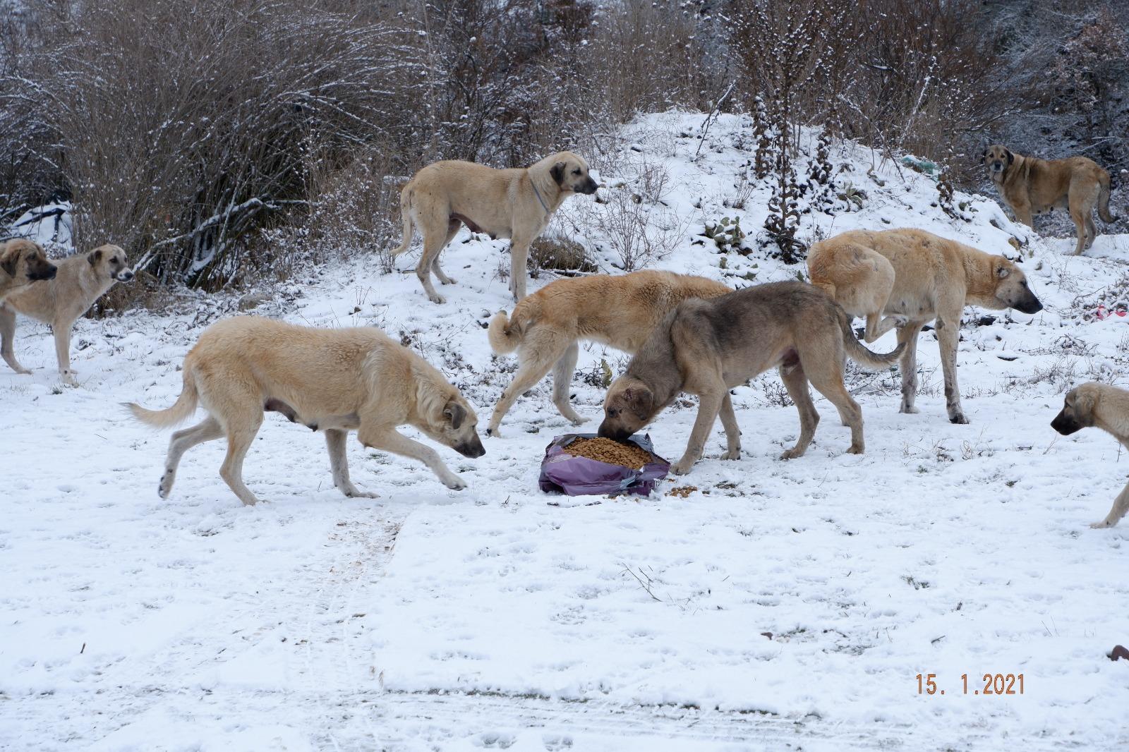 Sokak Hayvanları Karlı Havada Unutulmadılar