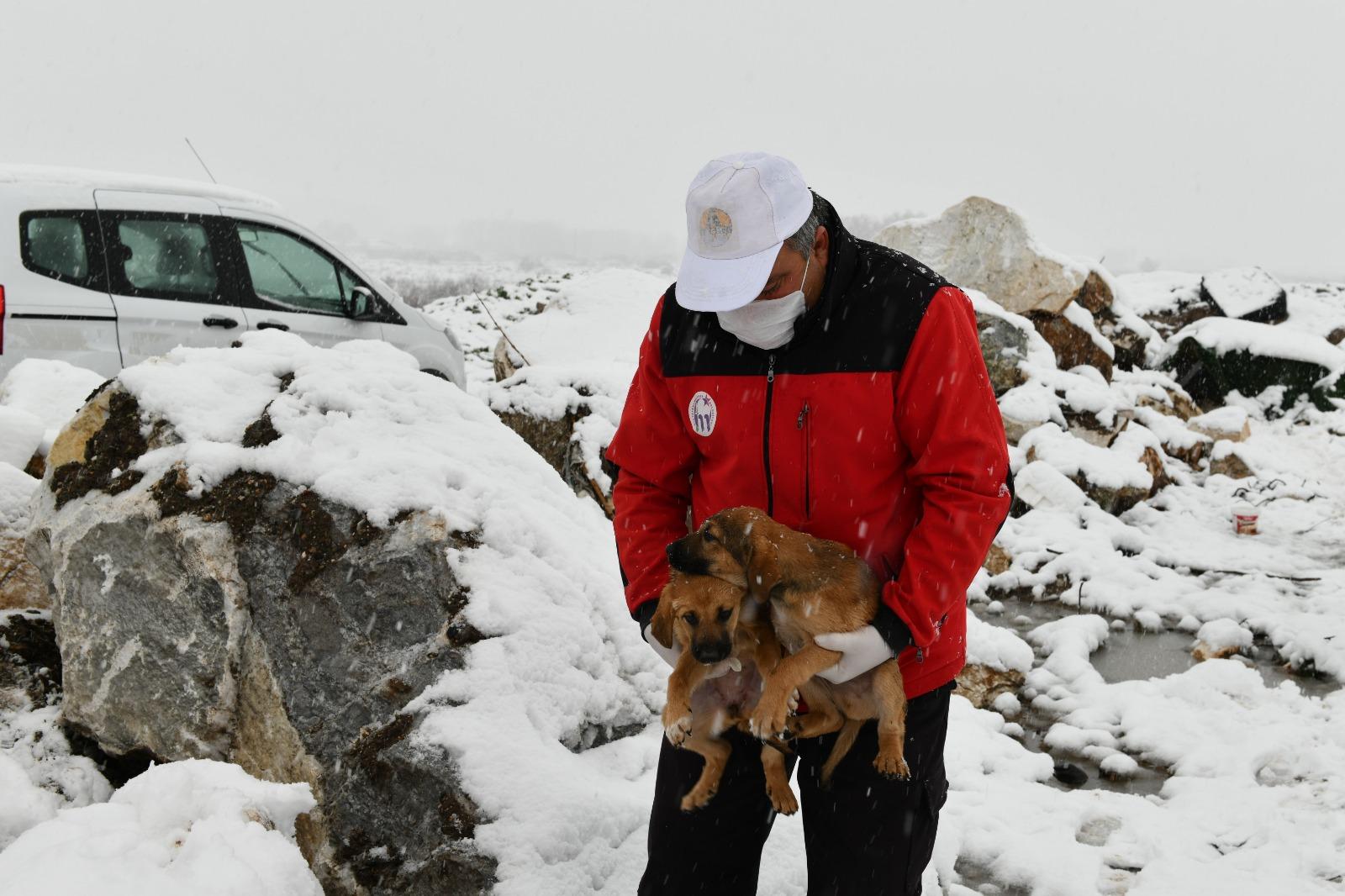 Mustafakemalpaşa'da 11 Yavru Köpek Kurtarıldı