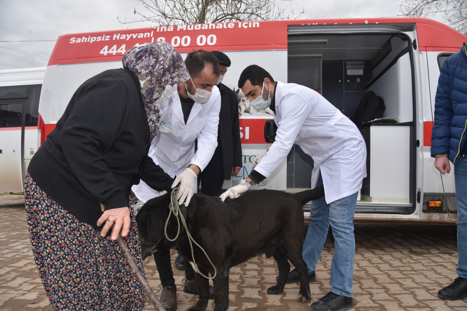 İzmit Belediyesi Mahallelerdeki Sokak Hayvanlarını Aşılıyor