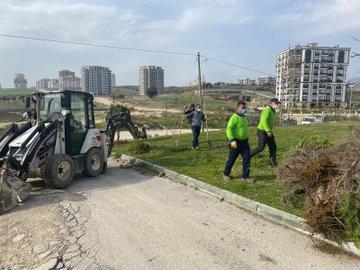 Antakya'da Ağaçlandırma Çalışmaları Devam Ediyor