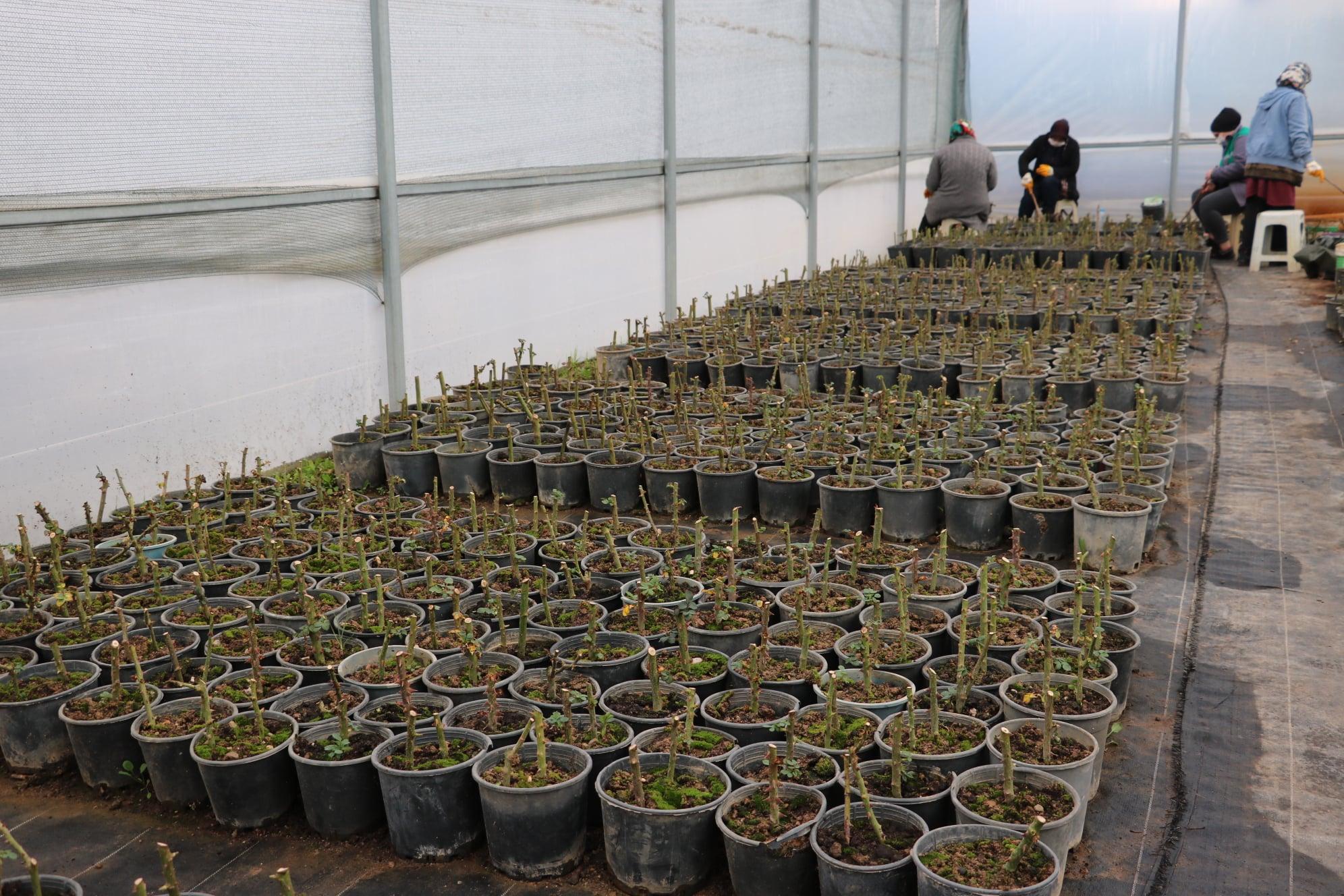 Beyşehir Belediyesi Fide ve Çiçekleri Kendi Üretiyor