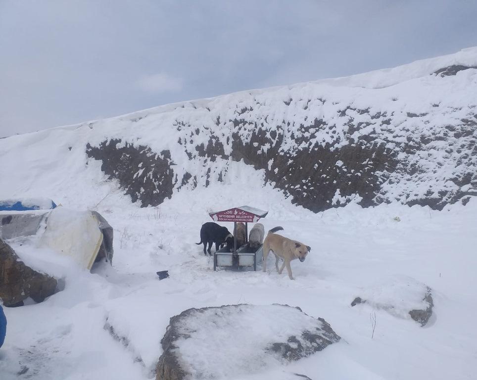 Seydişehir'de Kış Şartlarında Sokak Hayvanları Yalnız Bırakılmadı
