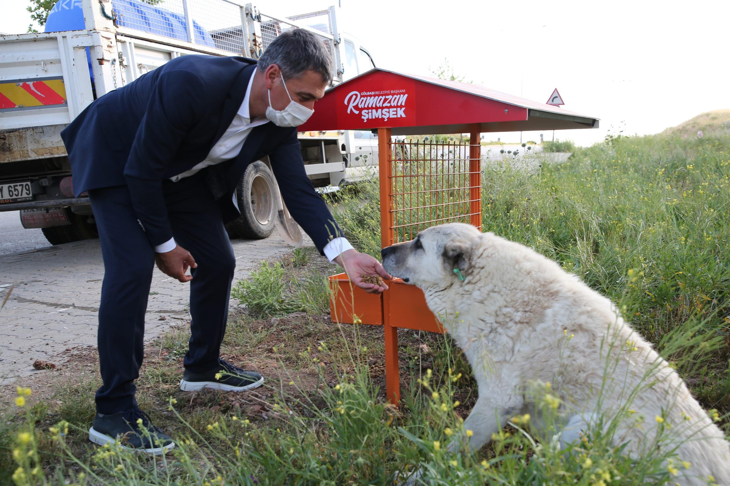 """Başkan Şimşek: """"Sokak Hayvanlarımıza Dokunanlar Karşılarında Bizi Bulacak"""""""