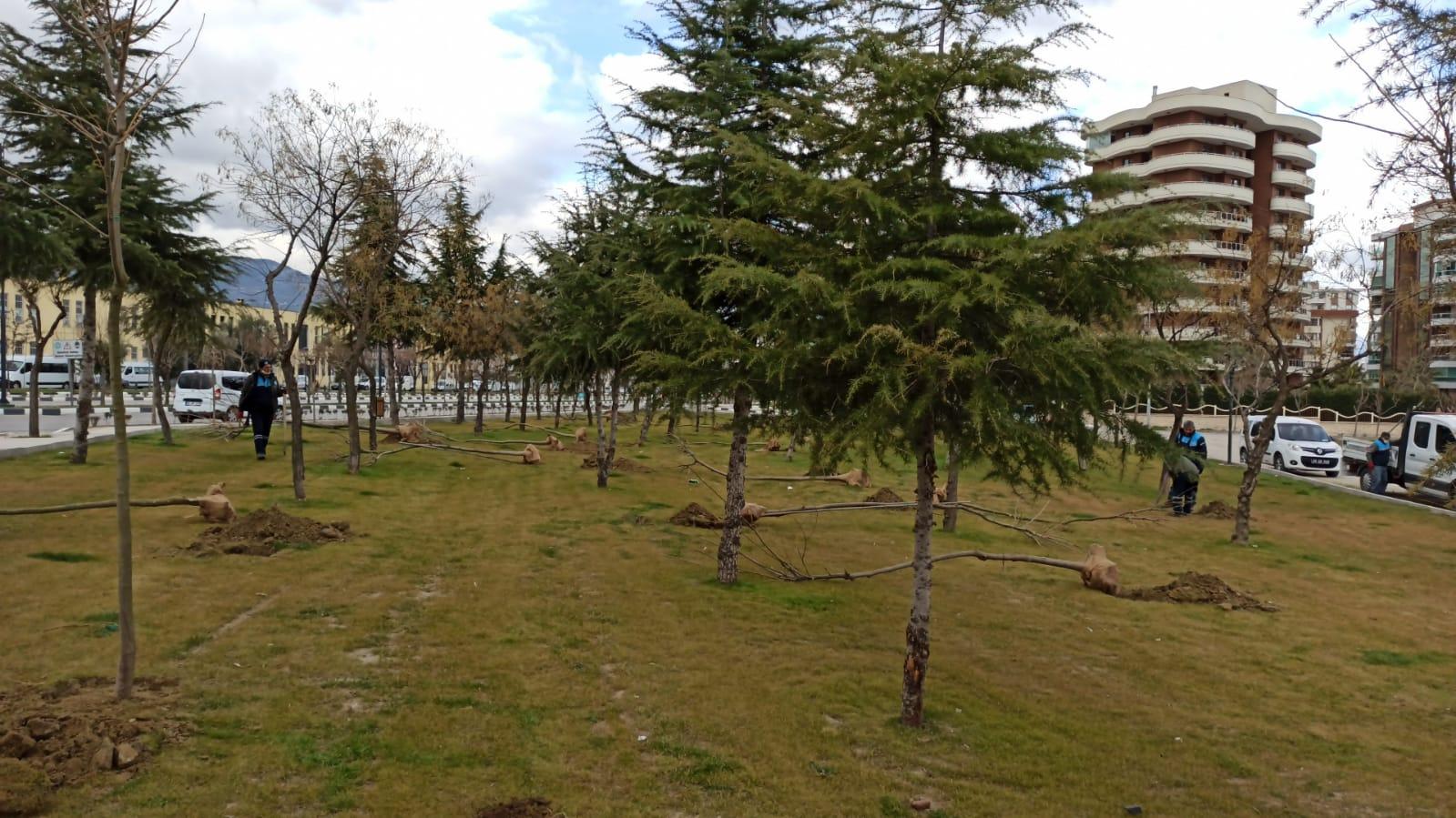 Manisa'da 3 Günde Tam 450 Tane Ağaç Dikildi