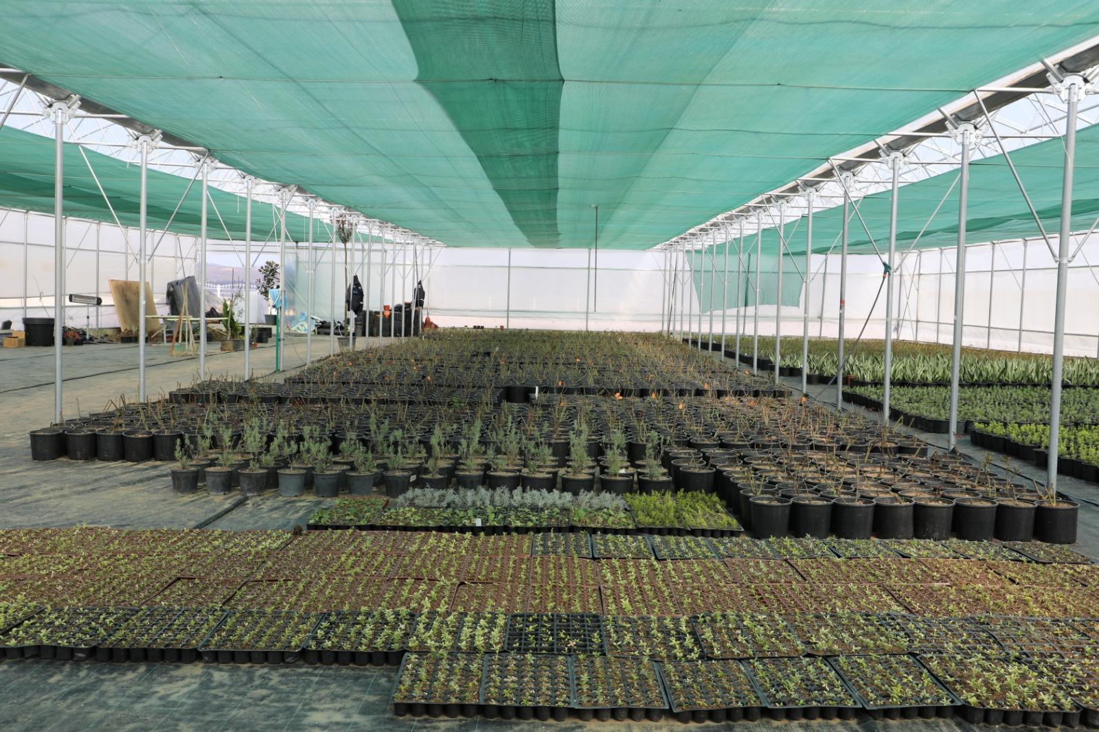 İzmit'te Su Tasarrufu Sağlayan Çiçekler Yetiştiriliyor