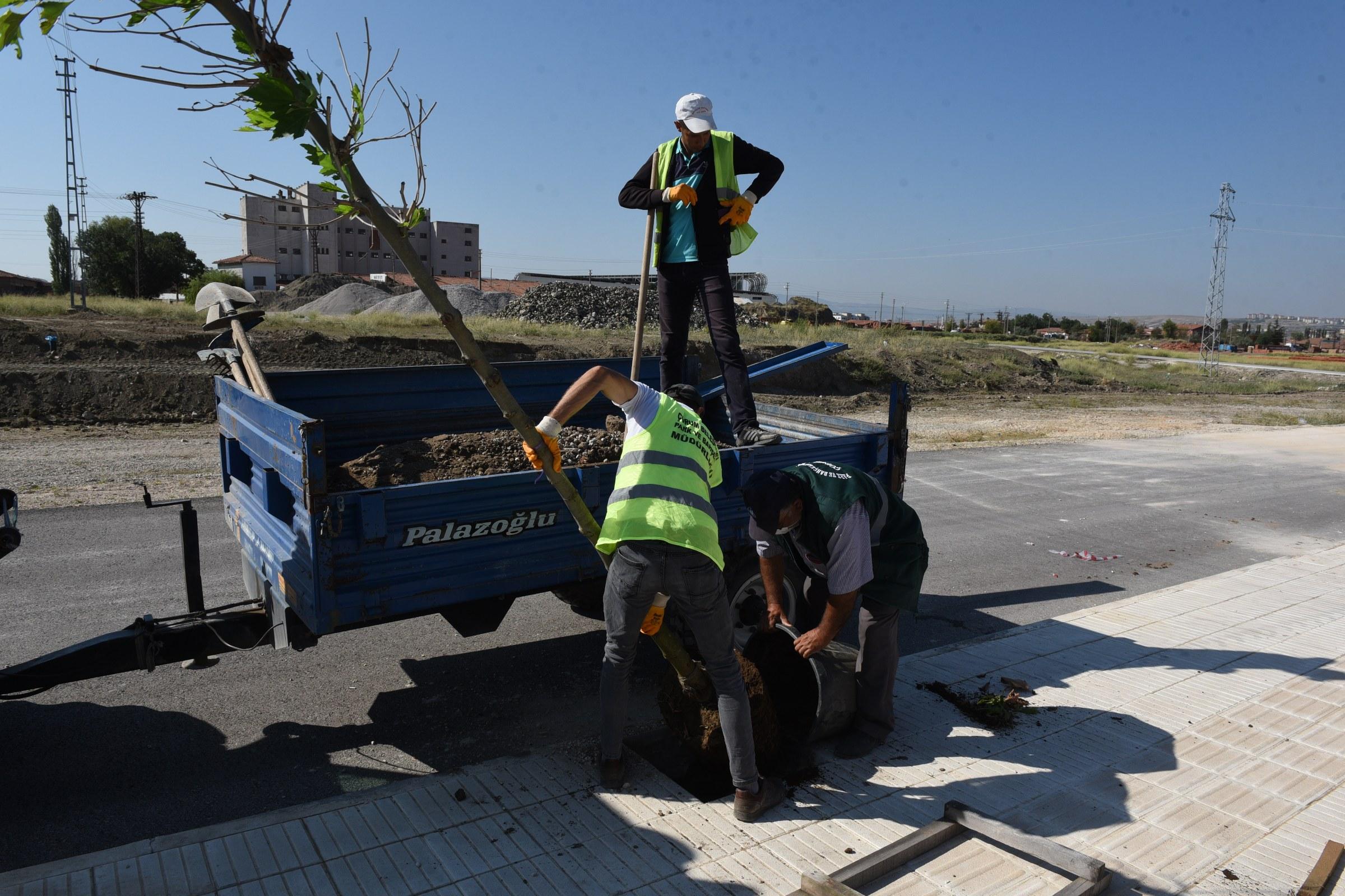 Çorum Belediyesi, 13 Bin Ağacı Toprakla Buluşturdu
