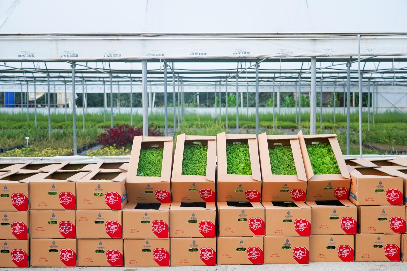 Bilecik Belediyesi 118 Bin 750 Adet Sebze Fidesini Çiftçilere Dağıtacak