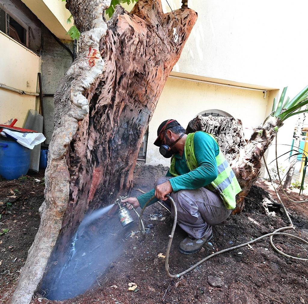 İzmir Büyükşehir, İki Yılda 120 Ağacı Kurtardı
