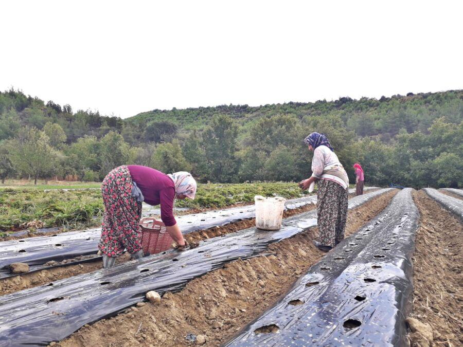 Akhisar Belediyesi'nce Kadın Çiftçilere Destek Verildi